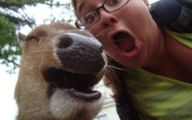 Funny Selfies With Animals 25 Cool Wallpaper
