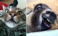 Funny Selfies With Animals 37 High Resolution Wallpaper