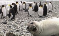Funny Selfies With Animals 7 Background