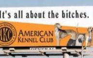 Funny Signs And Billboards 30 Free Wallpaper
