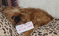 Funny Signs Around Dog's Neck 14 Desktop Background