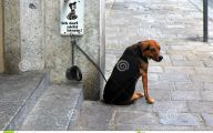 Funny Signs Around Dog's Neck 22 Free Hd Wallpaper