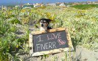 Funny Signs Around Dog's Neck 23 Desktop Wallpaper