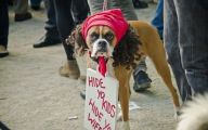 Funny Signs Around Dog's Neck 24 Background Wallpaper