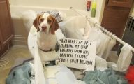 Funny Signs Around Dog's Neck 29 Free Wallpaper