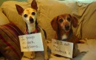 Funny Signs Around Dog's Neck 31 Free Wallpaper