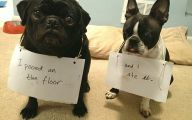 Funny Signs Around Dog's Neck 6 Wide Wallpaper