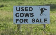 Funny Signs For Sale 26 Hd Wallpaper