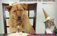Funny Weird Birthday Wishes 11 Free Hd Wallpaper