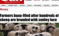 Funny Weird News 48 Desktop Background