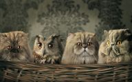 Funny Weird Pics 13 Background