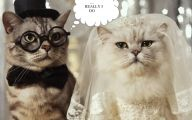 Funny Weird Pictures 18 Background Wallpaper