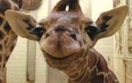 Hilarious Baby Selfies 20 Background Wallpaper