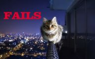 Epic Funny Cat Fails 1 Cool Wallpaper