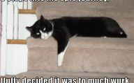 Epic Funny Cat Fails 10 Background Wallpaper