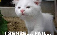 Epic Funny Cat Fails 14 Cool Hd Wallpaper