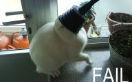 Epic Funny Cat Fails 18 Hd Wallpaper