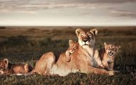 Funny African Animals 42 Desktop Background