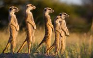 Funny African Animals 46 Hd Wallpaper