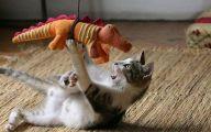 Funny Animals Cats 1 Hd Wallpaper