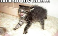 Funny Animals Cats 12 Free Wallpaper