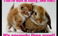 Funny Animals Cats 15 Cool Wallpaper