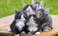 Funny Animals Cats 2 Desktop Wallpaper