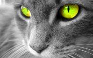 Funny Animals Cats 24 Free Hd Wallpaper