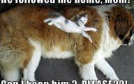 Funny Animals Cats 25 Free Hd Wallpaper