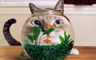 Funny Animals Cats 28 Desktop Background