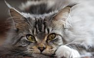 Funny Animals Cats 3 Background