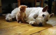 Funny Animals Cats 31 Widescreen Wallpaper