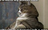 Funny Animals Cats 32 Cool Hd Wallpaper
