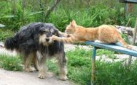 Funny Animals Cats 33 Free Hd Wallpaper
