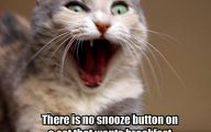 Funny Animals Cats 35 Free Wallpaper