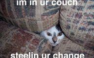 Funny Animals Cats 36 Desktop Background