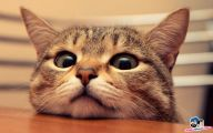 Funny Animals Cats 37 Desktop Background
