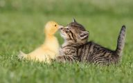 Funny Animals Cats 4 Background