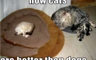 Funny Animals Cats 8 Free Wallpaper