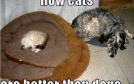 Funny Animals Cats 8 Free Wallpaper