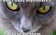 Funny Animals Cats 9 Cool Hd Wallpaper