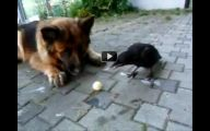 Funny Animals Clips 17 Background Wallpaper