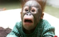 Funny Animals Clips 18 Wide Wallpaper