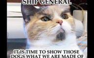 Funny Animals Clips 20 Desktop Background