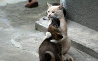 Funny Animals Clips 4 Background