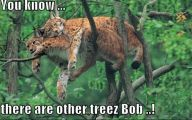 Funny Big Cats 4 Cool Wallpaper