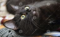 Funny Black Cat 1 Cool Hd Wallpaper