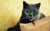 Funny Black Cat 6 Desktop Background