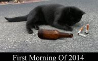 Funny Black Cat Pictures 15 Hd Wallpaper