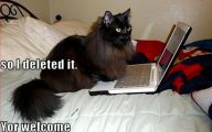 Funny Black Cat Pictures 2 Background Wallpaper